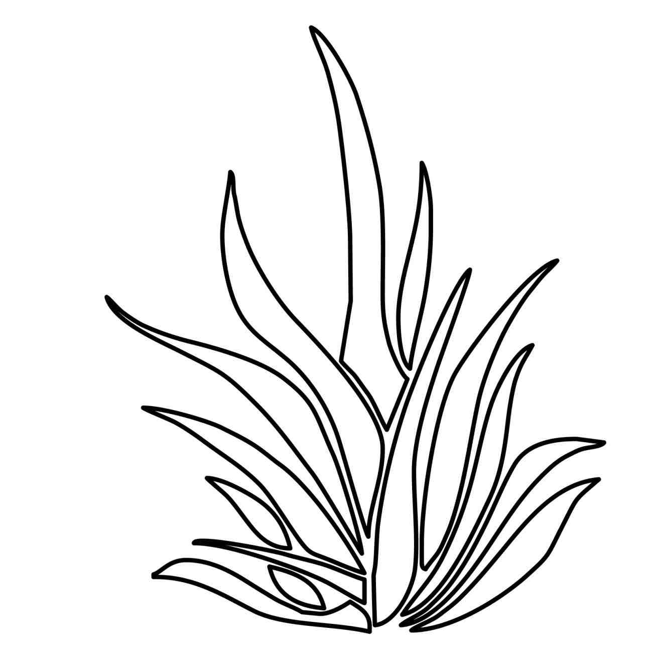 Underwater Plants Drawing