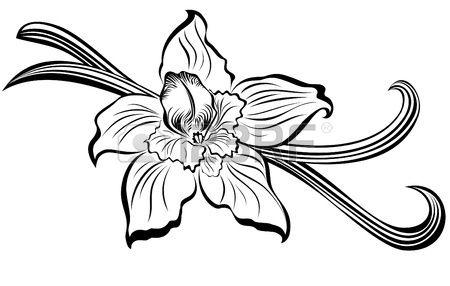 450x286 vanilla flower and vanilla pods