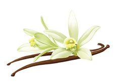 Vanilla Flower Drawing