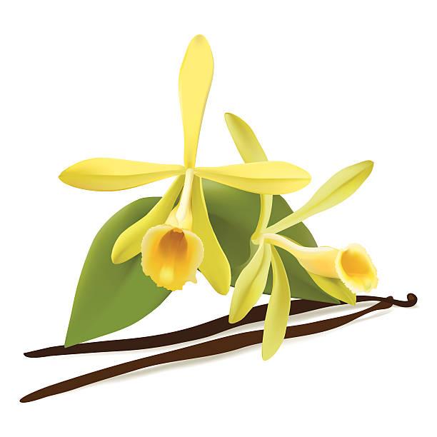 612x612 free vanilla clipart, download free vanilla clip art