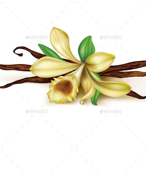 590x700 vanilla clipart vanilla flower drawing vanilla bean flower odds