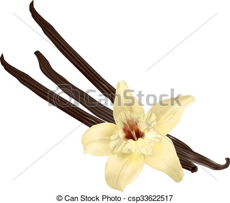 450x397 vanilla pods isolated vanilla flower and pods isolated