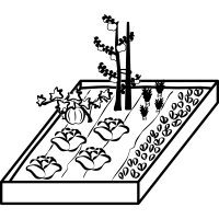 Vegetable Garden Drawing