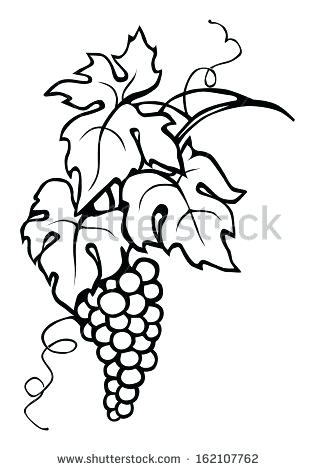 64508aa8a 315x470 Drawing Grapes Grape Vine Leaves Grape Vines Stenciling Line