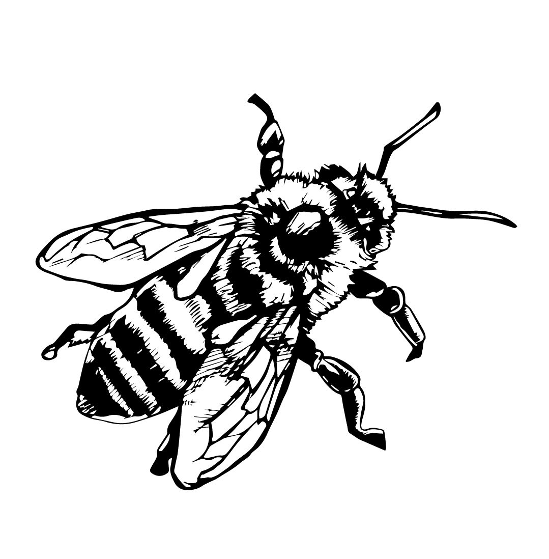 1079x1098 Anatomy Drawing Honey Bee For Free Download