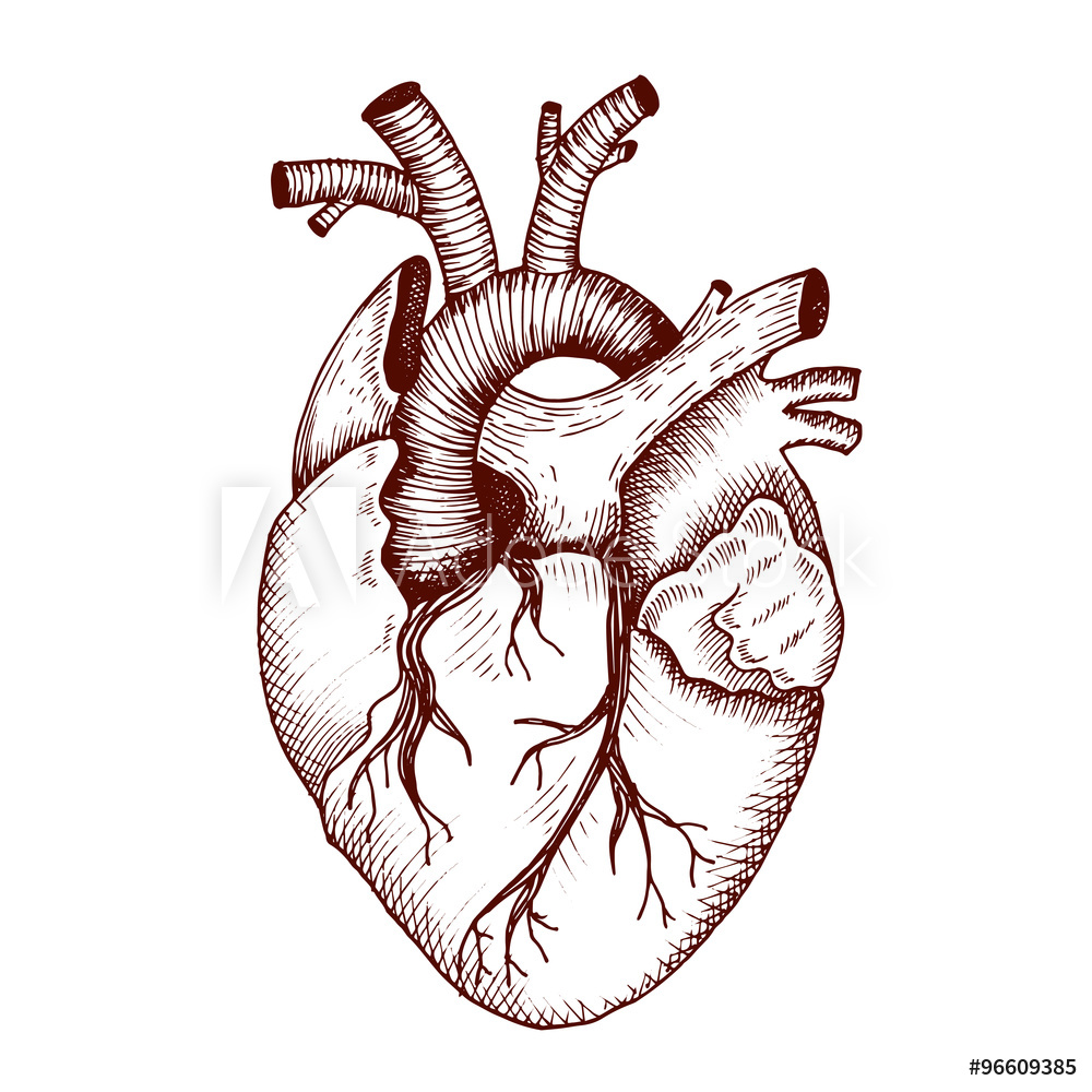 1000x1000 Poster, Foto Anatomical Heart