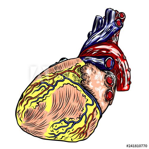 500x500 Realistic Human Heart Vintage Style Hand Drawing Cartoonish