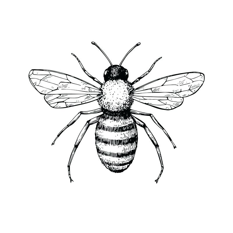 800x800 insect drawing draw the missing half insects insect drawing