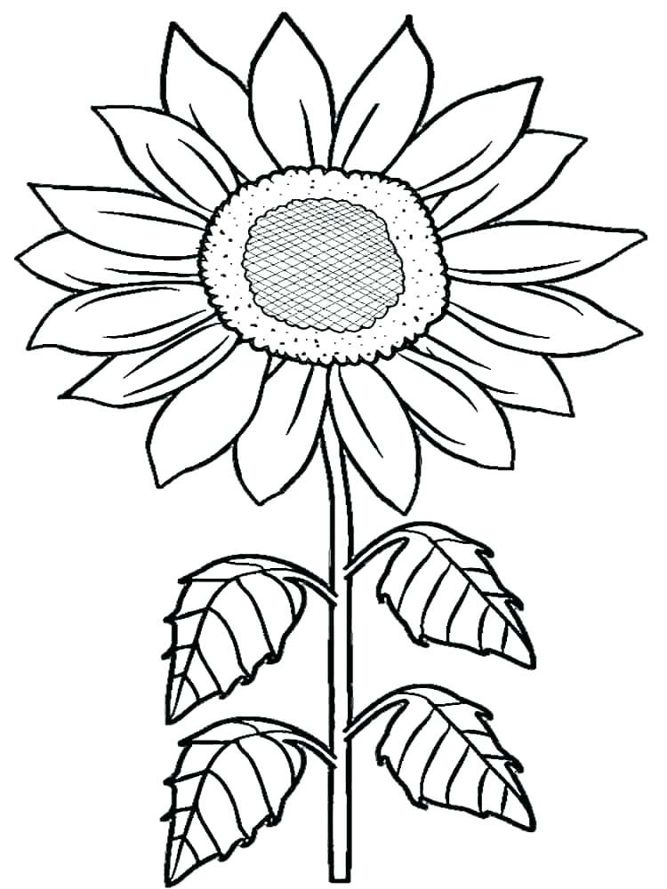 750x1000 coloring pages van bedroom coloring pages van also sunflower