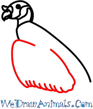 300x350 How To Draw A King Vulture