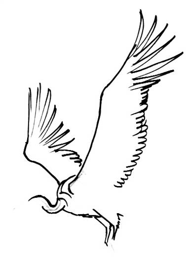 383x539 How To Draw A Vulture