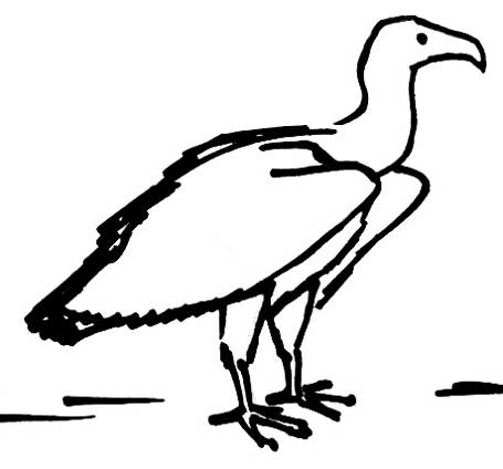 455x424 Vulture Drawing