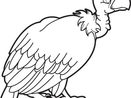 440x330 Vulture Coloring Pages, Perched Turkey Vulture Coloring