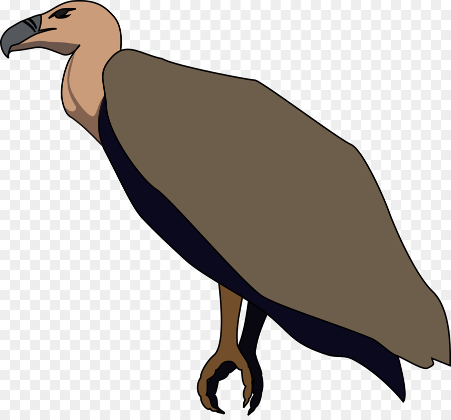 900x840 Bird, Drawing, Wing, Transparent Png Image Clipart Free Download