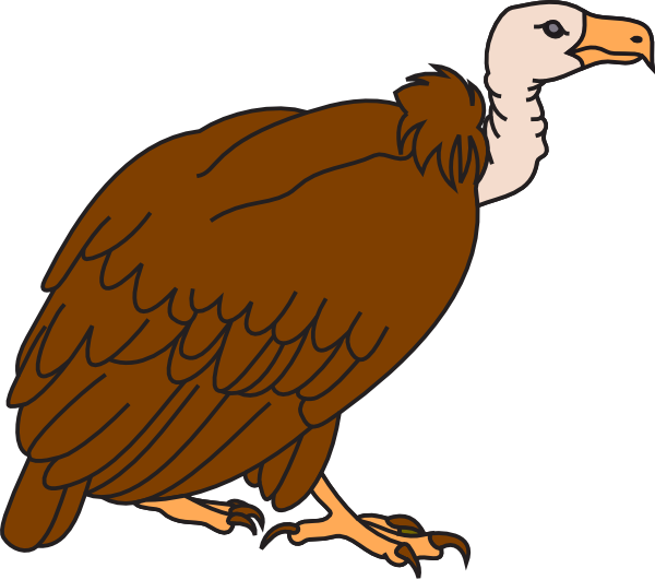 600x531 Collection Of Free Vulture Drawing Buzzard Download On Ui Ex