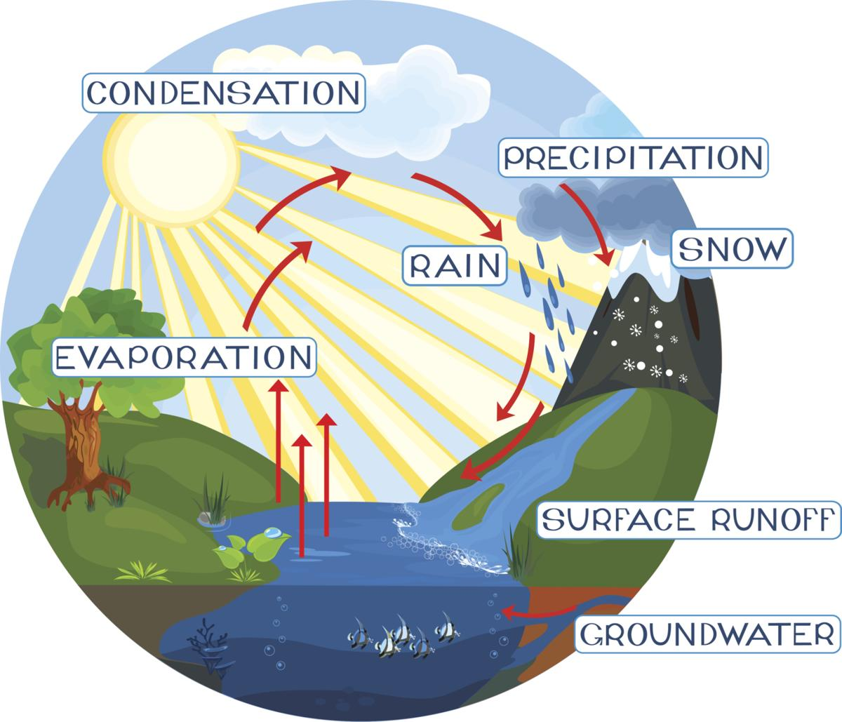 1200x1029 A Simple Guide To The Steps Of The Water Cycle