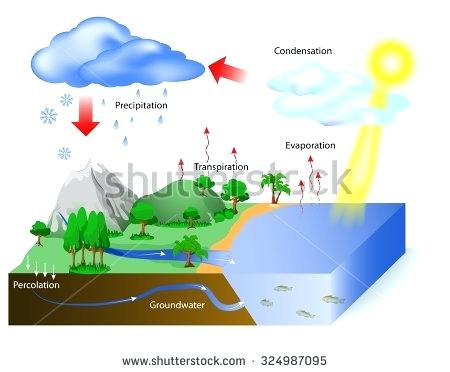 450x372 Easy Diagram Of Water Cycle Theglobalwatch Club