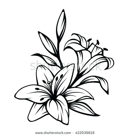 450x470 lily flower outline drawn lily outline x lily flower outline