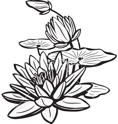 380x400 water lily drawing wonderous water lily lillies lilies