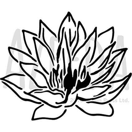 Water Lily Flower Drawing