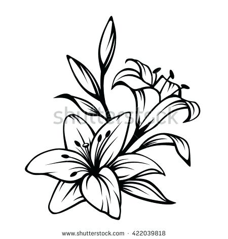 450x470 drawing lily flower how to draw a lily flower step lily flower