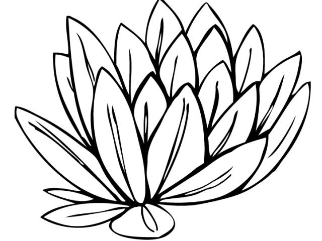 640x480 water lily clipart diagram