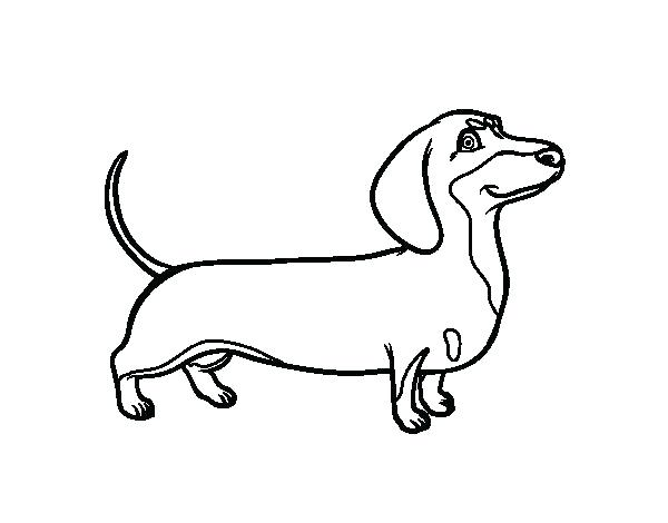 600x470 dachshund coloring book pages dachshund cartoon drawing coloring