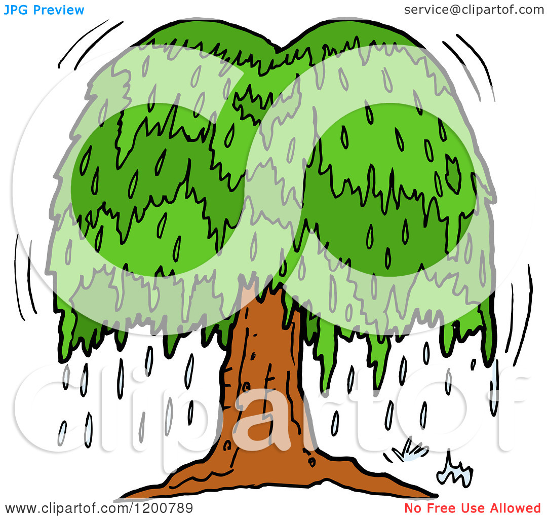 Weeping Willow Tree Drawing