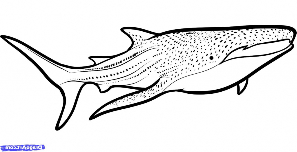 Whale Drawing Pictures