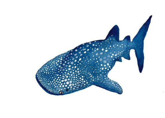 Whale Shark Drawing Free Download Best Whale Shark Drawing On