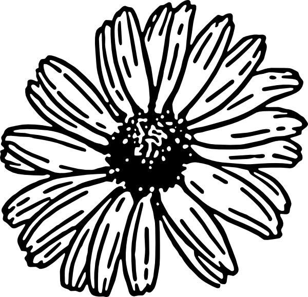 600x579 Daisy Clip Art Free Vector In Open Office Drawing