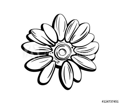 500x436 Beautiful Monochrome, Black And White Daisy Flower Isolated
