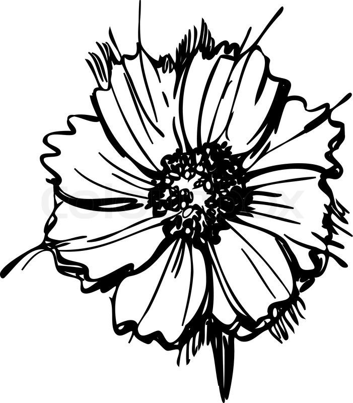 701x800 Black And White Daisy Drawing
