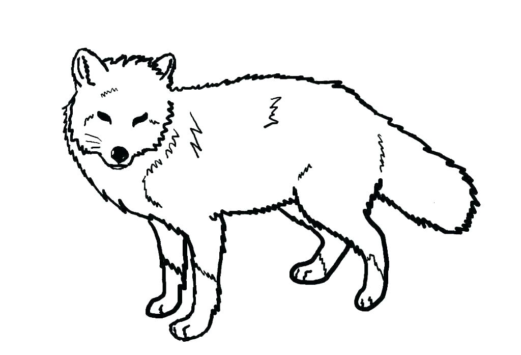 1024x697 arctic fox coloring pages arctic fox coloring pages animals