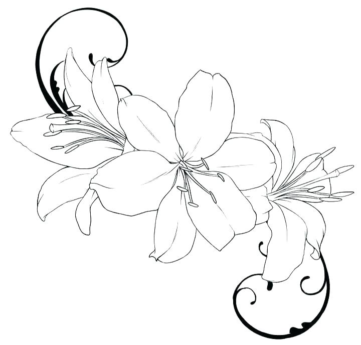 White Lily Drawing Free Download On Clipartmag