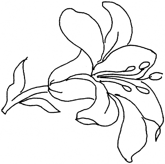 Flower black and white lily. Drawing free download best