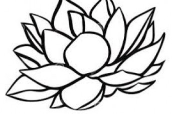 343x228 water lily drawing best water lily flower drawing water lily