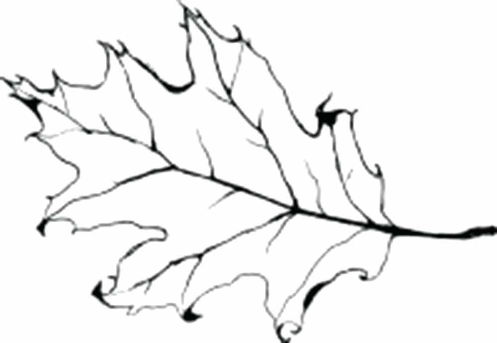1000x690 oak leaf outline coloring oak leaf outline free
