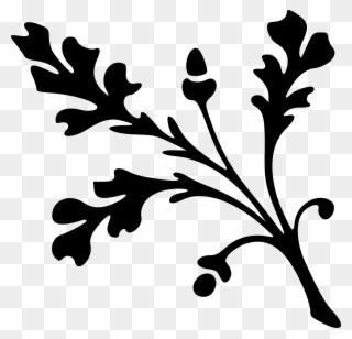 320x308 download white oak leaf outline clipart white oak leaf
