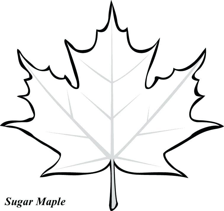 756x714 fall leaf drawing leaf outline fall leaves fall leaf cartoon