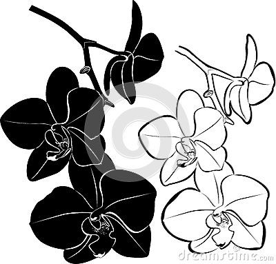400x383 orchids flowers favorite flowers orchid drawing, orchids, flowers