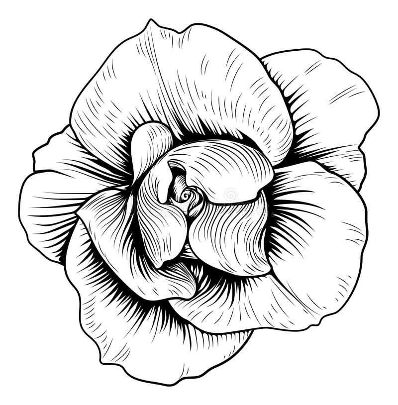 800x814 Collection Of Free Etched Clipart White Rose Download On Ui Ex