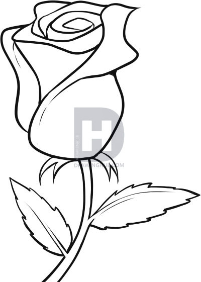 400x561 How To Draw A White Rose, Step