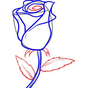 302x302 How To Draw A White Rose, Step