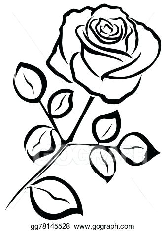 337x470 Picture Of Rose In Black And White White Rose On The Black