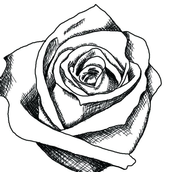 607x594 Rose Drawing Simple Black And White Rose Drawings Free Download