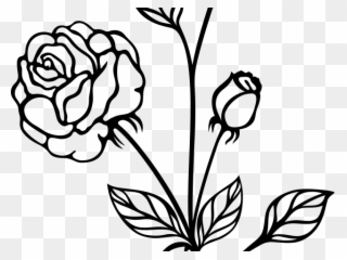 320x240 White Rose Clipart, Transparent White Rose Clip Art Png Download