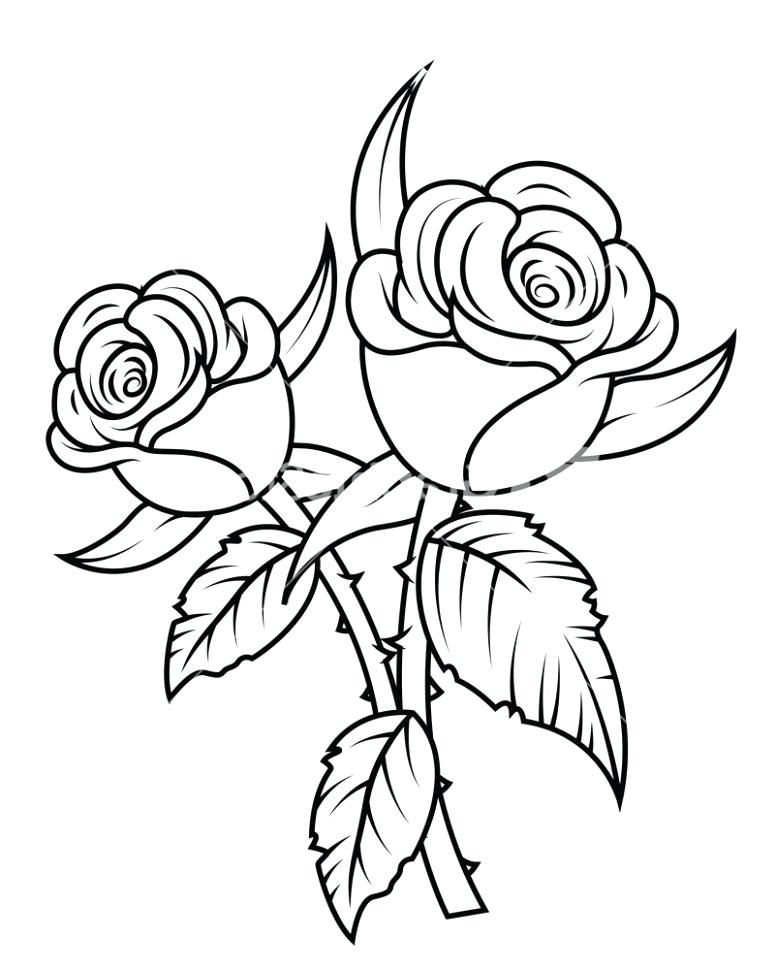 776x970 Roses Pencil Drawing