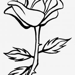 250x250 Black And White Rose Drawing Tattoo Step