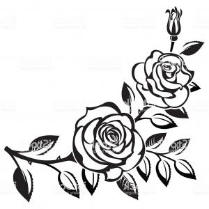300x300 Black Branch Of Roses Drawing On White Background Gm Soidergi